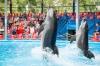 В дельфинариях Алушты будут проводиться сеансы терапии с детьми-инвалидами